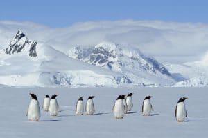 Manchots Antarctique © Nath Michel / Communauté de communes Station des Rousses