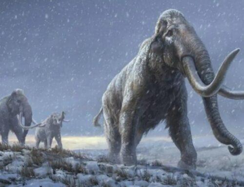 Bientôt des mammouths ?